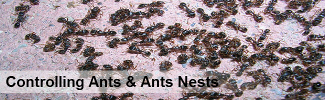 Ant Control Durban