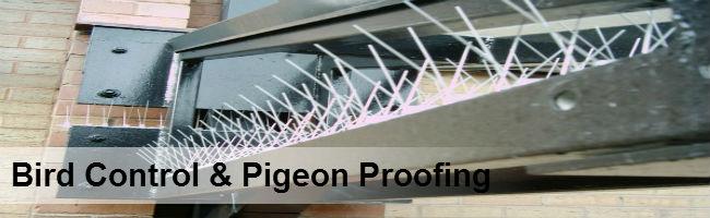 Bird Control Durban