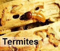 Termite control Durban
