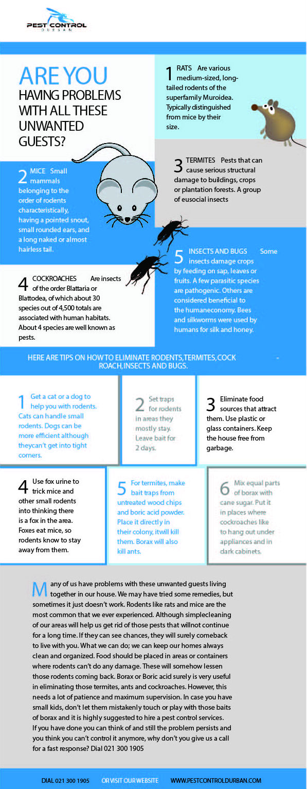Pest Control Infographic Durban