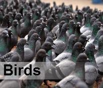 pigeon control durban