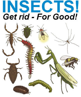 insect control in Durban